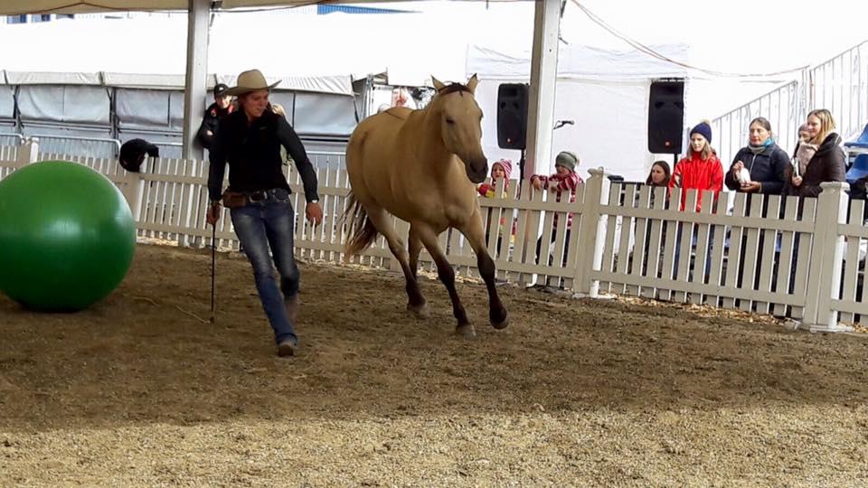 Apropos Pferd 2016